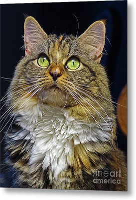 Portrait Of Holly Metal Print by Larry Nieland