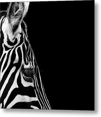 Portrait Of Zebra In Black And White Iv Metal Print