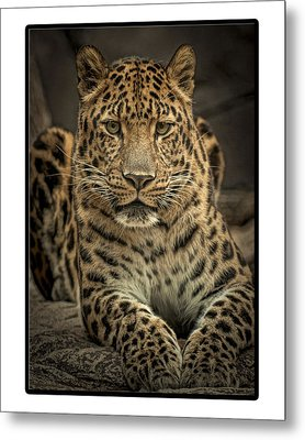 Metal Print featuring the photograph Poser by Cheri McEachin