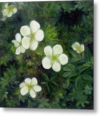 Potentilla Metal Print by FT McKinstry