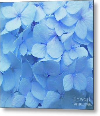 Powder Blue Hydrangea Metal Print by Barbara McMahon