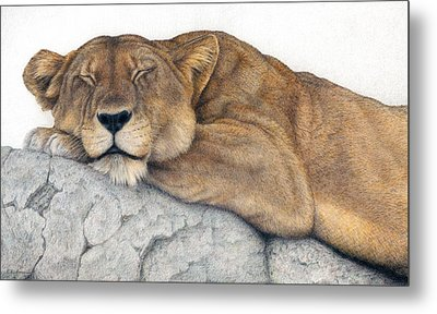 Power And Grace At Rest Metal Print by Pat Erickson