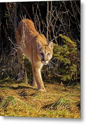 Power And Grace Metal Print by Jack Bell
