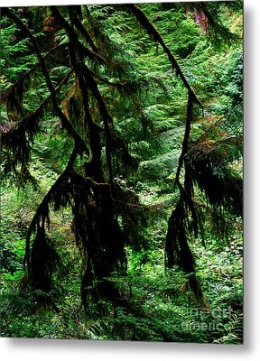 Prairie Creek Redwoods State Park 12 Metal Print by Terry Elniski