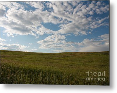 Metal Print featuring the photograph Prairie Field by Wilko Van de Kamp