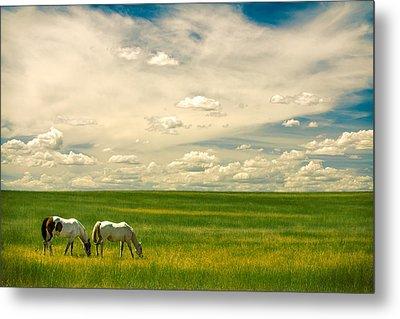 Prairie Horses Metal Print by Todd Klassy