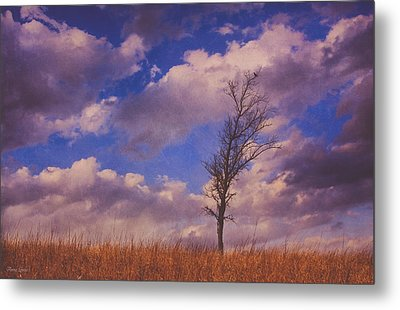 Prairie Tree Survivor Metal Print by Anna Louise