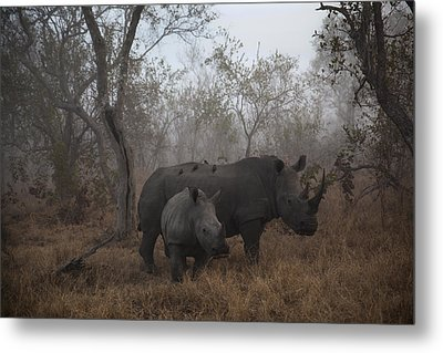 Pre Dawn Encounter Metal Print by Andre Victor
