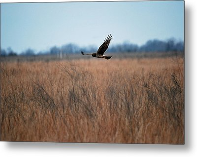 Metal Print featuring the photograph Prepare For Landing by Teresa Blanton