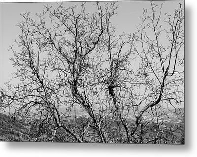Pretoro - Trees Metal Print