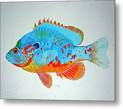 Pretty Blue Fish Metal Print by Don Seago