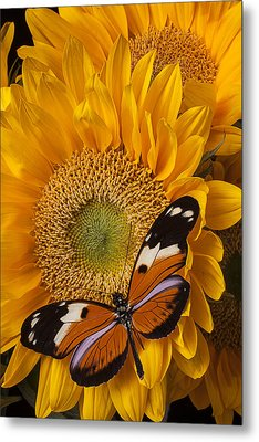 Pretty Butterfly On Sunflowers Metal Print