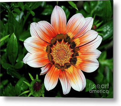 Metal Print featuring the photograph Pretty Gazania By Kaye Menner by Kaye Menner