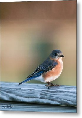 Pretty In Blue Metal Print by Phill Doherty