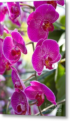 Pretty In Fuchsia Metal Print by A New Focus Photography