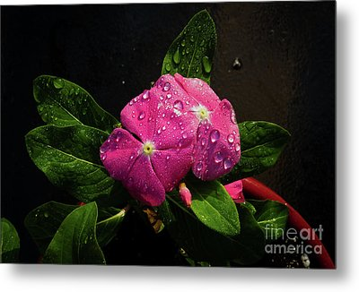 Metal Print featuring the photograph Pretty In Pink by Douglas Stucky