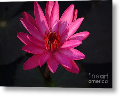 Pretty In Pink Metal Print by John S