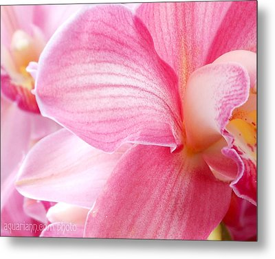 Pretty In Pink Orchid Petals Metal Print