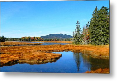 Pretty Marsh Metal Print