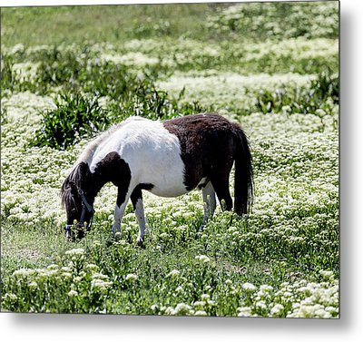 Pretty Painted Pony Metal Print by James BO Insogna