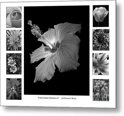 Metal Print featuring the photograph Pretty Petals Collection II by Diane E Berry