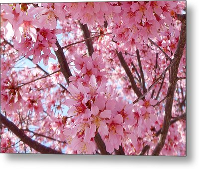 Pretty Pink Cherry Blossom Tree Metal Print