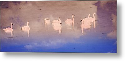 Pretty Swans All In A Ro Metal Print