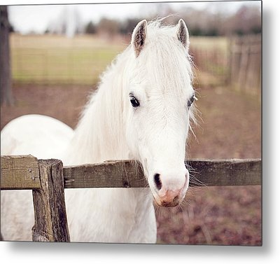 Pretty White Pony Looking Over Fence Metal Print by Sharon Vos-Arnold