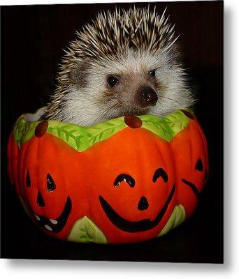 Prickly Pumpkin Metal Print