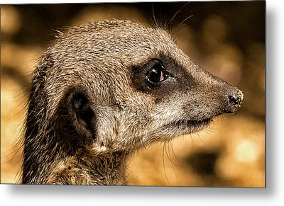 Metal Print featuring the photograph Profile Of A Meerkat by Chris Boulton