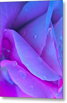 Profile Of A Rose Metal Print by Gwyn Newcombe