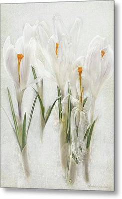 Promise Of Spring Crocus Metal Print by Barbara McMahon