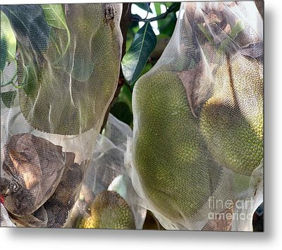 Protect Your Durian Metal Print by Kathy Daxon