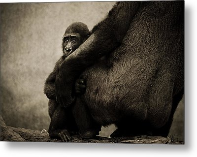 Protection Metal Print by Animus  Photography