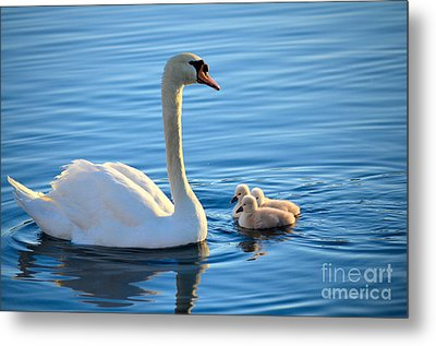 Proud Mother Metal Print by Deb Halloran