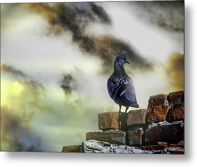 Proud To Be A Pigeon Metal Print by Bob Orsillo