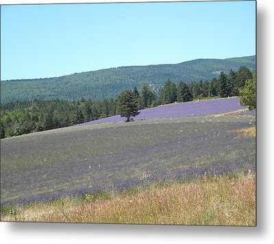 Metal Print featuring the photograph Provence Landscape by Manuela Constantin