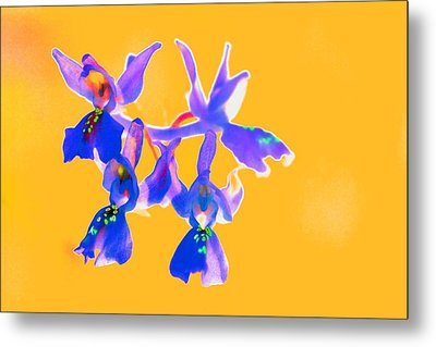 Orange Provence Orchid  Metal Print