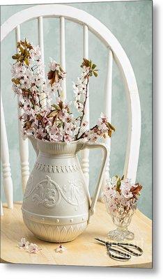 Prunus Spring Blossom Metal Print by Amanda Elwell