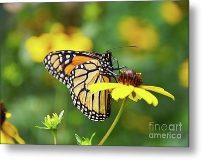 P.s. I Love You Nature Art Metal Print by Robyn King
