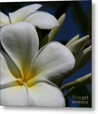 Pua Lena Pua Lei Aloha Tropical Plumeria Maui Hawaii Metal Print by Sharon Mau