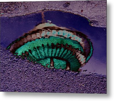 Puddle Needle Metal Print by Tim Allen