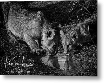Metal Print featuring the photograph Puddle Time by Karen Lewis