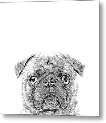 Pug Dog Sketch Metal Print