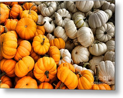 Pumpkin And Pumpkin Metal Print by Olivier Le Queinec