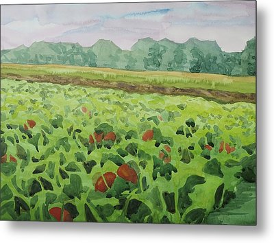Pumpkin Field Metal Print by Bethany Lee