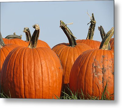 Pumpkin Patch II Metal Print by Kyle West