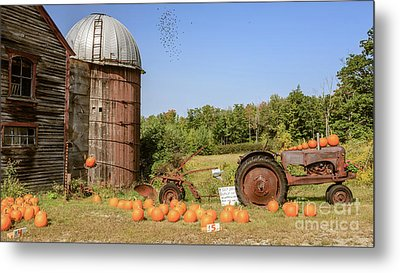 Pumpkins For Sale Thanks For Your Honesty Metal Print