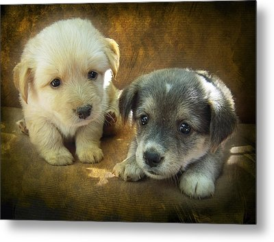 Puppies Metal Print by Svetlana Sewell