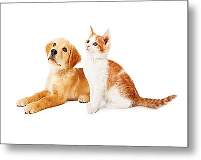 Puppy And Kitten Looking To Side Metal Print by Susan Schmitz